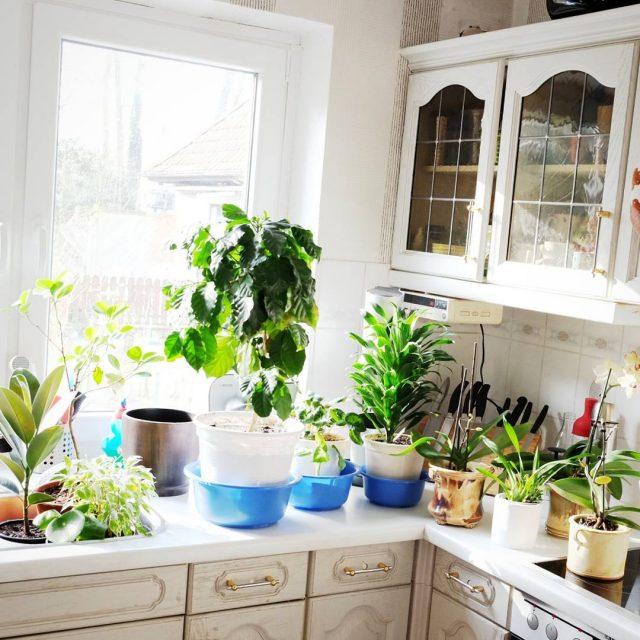 Badetag urbanjungle zimmerpflanzen pflanzenliebe hoffentlichschaltetkeinerdenherdan