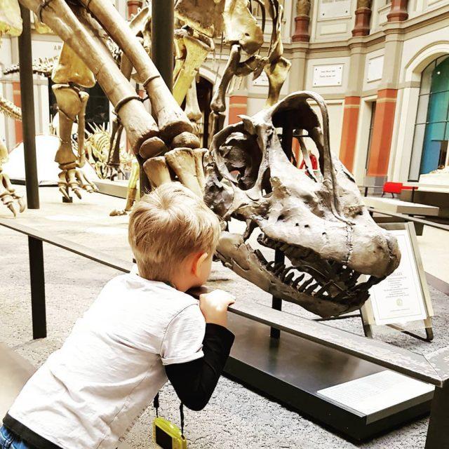 Kleiner Dinofan im Dinohimmel  naturkundemuseumberlin dinosaurier dinofan unterwegsmitkindern brachiosaurus